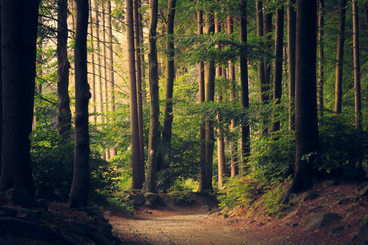 Sådan kan du nemt støtte regnskoven